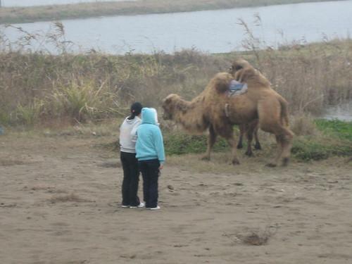 Hello Mr. Camel!