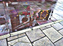 wider shade of pavement (?) (weef kichards) Tags: street flowers reflection wet pool rain pavement trottoir wetness