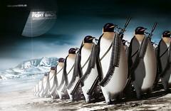 Prowildlife (Penguins)