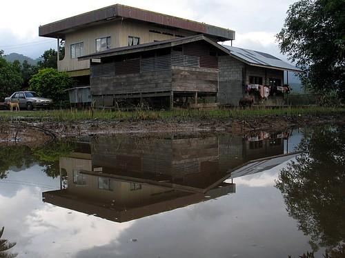 Rumah Di Tepi Sawah