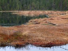(Per Lissel) Tags: nature landscape sweden natur marsh sverige landskap myr zd 1445mm pjl myrland gstrikland rimsbo