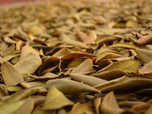 Dry leaves(C+up) by bharathiclick.
