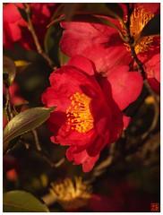 Flower 070108 #01