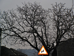 sign (Mihai-ela) Tags: tree sign geotagged romania 2007 ianuarie2007 geo:lat=47359888 geo:lon=23529131