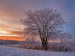 January sunset (Krogen) Tags: winter nature norway wow landscape norge vinter natur norwegen olympus c7070 noruega scandinavia akershus romerike krogen landskap noorwegen noreg ullensaker skandinavia jessheim photomatix specland nordbytjernet lamigliorefotodelmese
