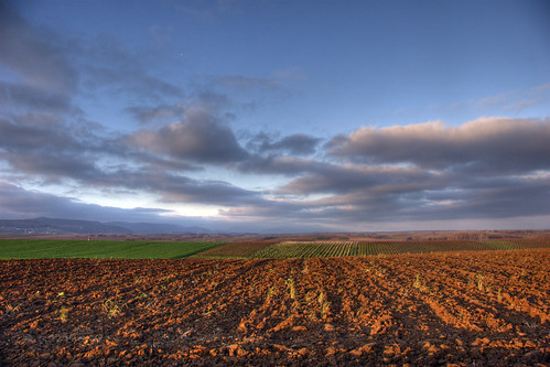 field by PauPePro @ flickr.com