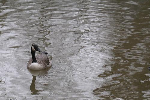 rainy pond #2