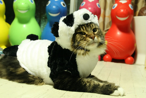 giggles cat panda