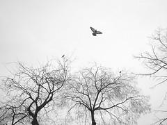 L-haut (Valentine294) Tags: sky paris tree birds friendship champdemars 2007