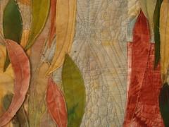 Eucalyptus Close up