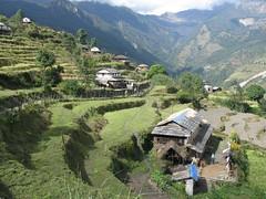 Rice terraces and farm houses (rikkiandmatt) Tags: nepal annapurnabasecamp
