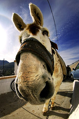 Why can't we be friends? (brunoat) Tags: espaa animal closeup andaluca spain friend funny donkey fisheye burro granada asno eos350d p2p peleng ojodepez monachil brunoat peleng8mmf35fisheye brunoabarca