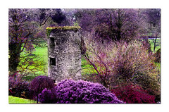 Blarney Castle (.finding.ireland.) Tags: 2002 irish green castle photo spring purple 10 sold g cork 11 april celtic blarney printed countycork vividcolor eireann top20castle findingireland impressedbeauty blarneytower ssccx200 pinterest