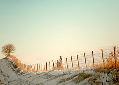 Fence Row (Todd Klassy) Tags: christmas travel winter light sky sun snow cold tree tourism ice field horizontal wisconsin rural fence season landscape morninglight wire warm glow quiet ditch bend snowy farm pastel horizon country hill rustic visit farmland edge serene copyspace bent roadside agriculture frigid barbwire barbed idyllic wi slope barbedwirefence clearsky lonetree sloping bending fenceposts fenceline inarow winterlandscape dairyfarm tranquilscene stockphotography smallfarm onetree rangeland agribusiness colorimage bobbed agritourism ruralscene rurallandscape ruralwisconsin winterinwisconsin wisconsinphotographer descriptivecolor lonelywinter toddklassy wisconsinlandscapephotographer blanchardvillewisconsin