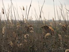How Now, Brown Cow #3 (The Eye) (kahala) Tags: cow bikes arles vache vélos camargue balade arlesbykahala