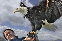 Eagle of dignity (Steven Ford / snowbasinbu