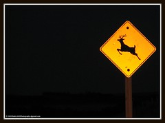 ...while driving home late one night. (westrock-bob) Tags: county copyright black animal sign yellow night danger warning canon dark photography three photo crossing image pics linden picture bob pic deer hills photograph alberta caution antelope reflective driver s2is prairie elk roadside hazard allrightsreserved westrock xing antler kanada warn kanata motorist canons2is cuthill kneehill westrockbob bobcuthillphotographygmailcom bobcuthill