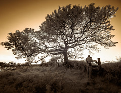 Photo of Sunset Tree (Adventures in Infrared)