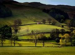 yorkshire dales in april (jody9) Tags: england film topf25 mediumformat landscape sheep britain pastoral springtime stonebarn pentax6x7 abigfave yorshiredales