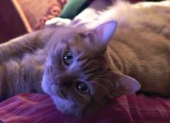 Mirada (Tiriti) Tags: cats view gatos mirada
