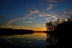 Clouds In The Water Ⅻ (mightyquinninwky) Tags: trees sky water clouds reflections evening december kentucky lexingtonky richmondroad fayettecounty centralkentucky ellserlielake