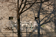Blockhouse Tree (sonofsteppe) Tags: street shadow urban detail tree abandoned wall composition grey graffiti hungary finding suburban tag budapest explore suburb sunlit peeled shadowy sonofsteppe urbanlifeoftrees