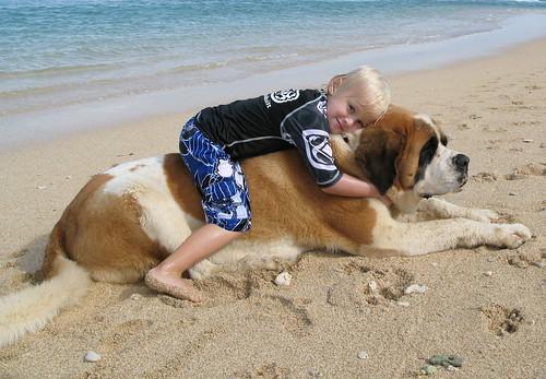 ( الأن موسوعة الكلاب بانواعها واسعارهاومواصفتها+صور)2012 320926442_3449a3cec1