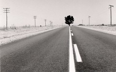 tree in middle of road (mm-j) Tags: road blackandwhite tree southafrica vanishingpoint angles illusion 1994 middle favourite northerncape