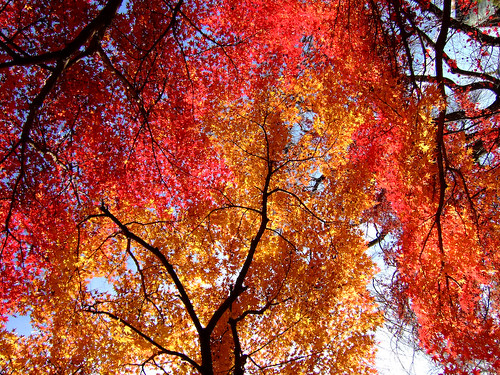 Sacred Fire Tree | Flickr - Photo Sharing!