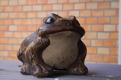 Flog (nori*) Tags: autumn raw kamakura 2006 flog kanagawa    eoskissdigitalx