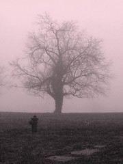 Alone in the Fog (photo_secessionist) Tags: tree film fog zeiss 35mm kodak jena contax ww2 amphibious contaxii ci33 trainingbase zeiss1155cmsonnarlens usnatb goldenvisions