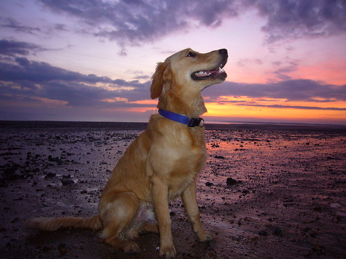 Blue dog, red sky, sandy beach.