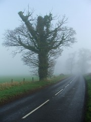 the guardians (vvt) Tags: road white mist tree lines fog near branches norfolk freezing warped gnarly vvt atmospheric gnarled southwalsham