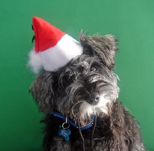 Christmas Cloe