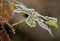 frost / rijp (friedkampes) Tags: autumn d50 frost dec20 whitefrost friedkampes