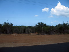 As if to demonstrate the lack of rainfall, here is a picture of the scrubland on Margherita.