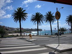 The view from our cafe (Kristyn in Canada) Tags: harbour sydney jacaranda