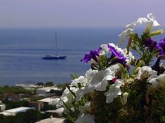 fiori (ducaconte) Tags: barca vela gabbiano vulcano salina eolie stromboli lipari pontos equipaggio