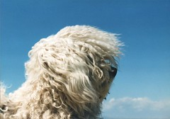 Blown with the wind (! .  Angela Lobefaro . !) Tags: sky dog chien pet cute girl beautiful animals topv111 cane wonderful hair puppy interestingness mujer topv333 pretty quality topv444 topv222 perro cao hund cachorro windswept linux 300views 200views bichon cutiepie bichonfrise cachorros 500views guapa ubuntu 200v rasta topf10 perrito badhairday v300 500v v400 italians topv200 bolognese caes 1on1 v200 547 cagnolino topv500  kubuntu 300v topf20 1025faves v500 digikam fris bichonfris 400v topv300 dogsallowed topv400 someonelovesthisshot 20faves interestingness420 1on1photooftheday hokhiko holidaysvacanzeurlaub angiereal maxgreco chiaca angelamlobefaro