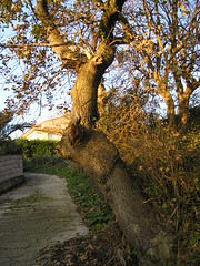 árbol en carrada