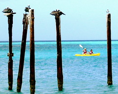 Pelicans and Kayak (Musical Mint) Tags: ocean travel blue summer vacation sky sun holiday beach pelicans water birds yellow island paradise kayak carribean pelican aruba posts paddling helluva musicalmint