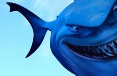 Shark! (Batram) Tags: blue window water shark sticker flickr great fave hai apair batram 2pair
