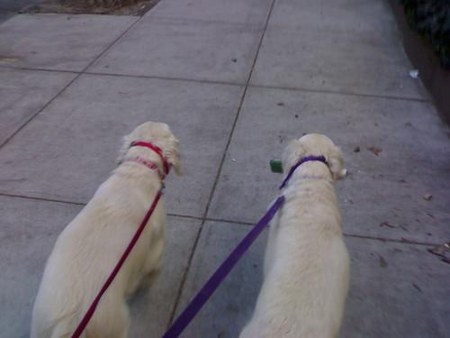 Pair-o-dogs