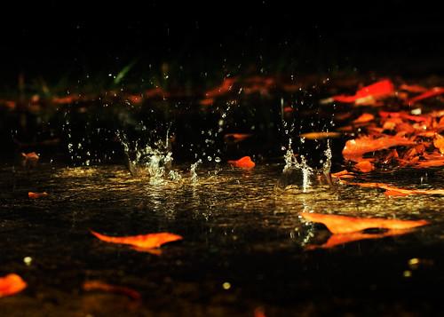 Rain Drops .24