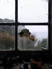 Broken wondow, abandonded farm, Stewart Island NZ. (travelmatt) Tags: ocean newzealand cold abandoned window wet farm nz shelter smashedwindow stewartisland oldestbuilding lpwindows