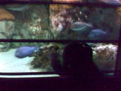 Celeste in the Big Tank