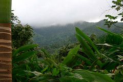 El Yunque, PR (Tom McNellis) Tags: landscape rainforest pr fajardo