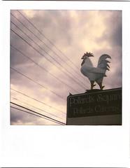 Pollard's Chicken