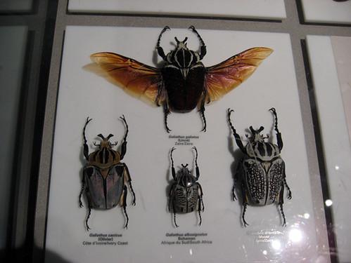 Insectarium028
