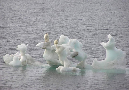 Polar Bear doom